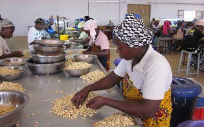 Pleijsier Bouw bouwt aan een duurzame cashewketen